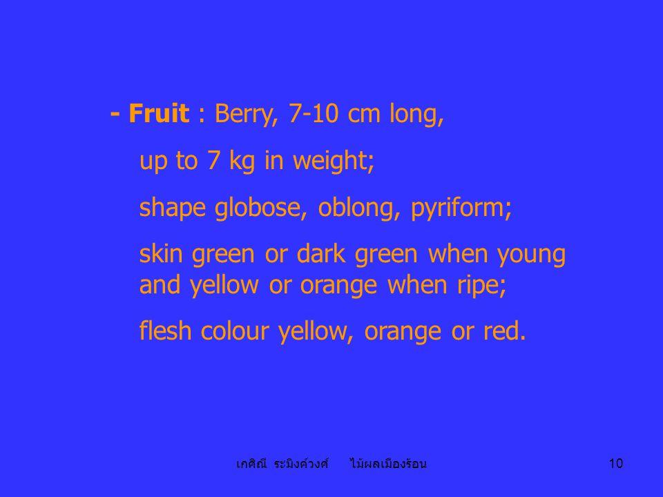 เกศิณี ระมิงค์วงศ์ ไม้ผลเมืองร้อน 10 - Fruit : Berry, 7-10 cm long, up to 7 kg in weight; shape globose, oblong, pyriform; skin green or dark green wh