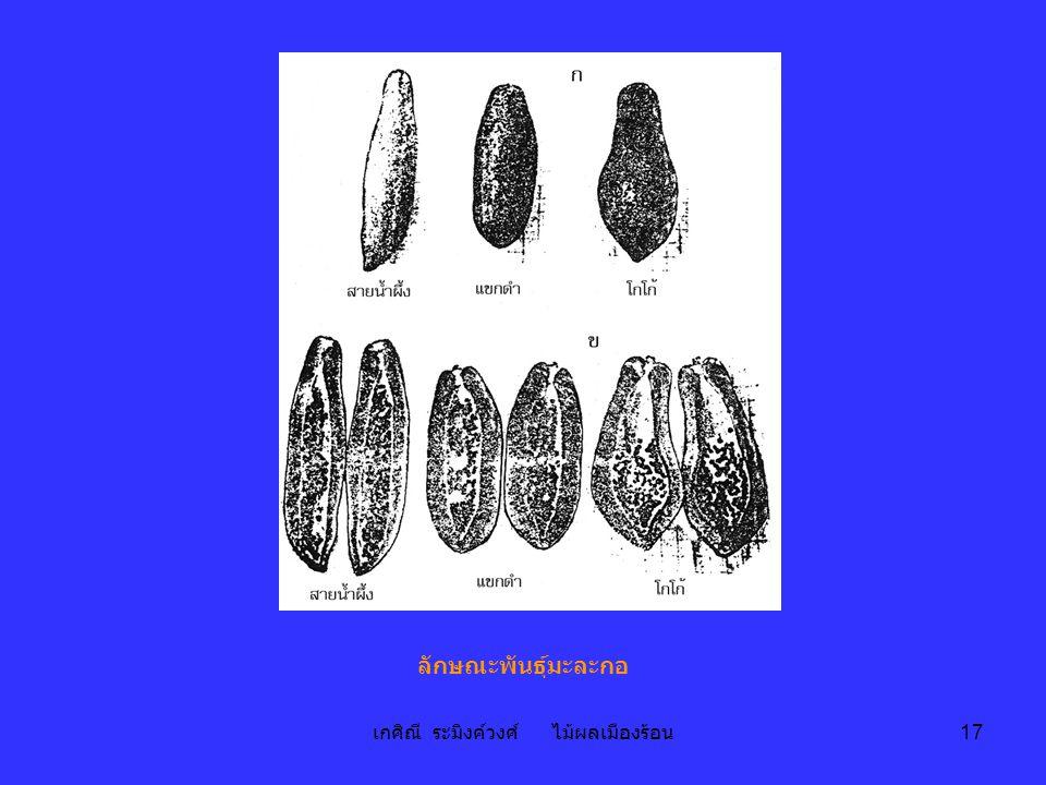 เกศิณี ระมิงค์วงศ์ ไม้ผลเมืองร้อน 17 ลักษณะพันธุ์มะละกอ