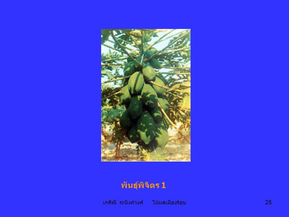เกศิณี ระมิงค์วงศ์ ไม้ผลเมืองร้อน 25 พันธุ์พิจิตร 1