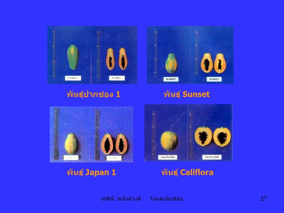 เกศิณี ระมิงค์วงศ์ ไม้ผลเมืองร้อน 27 พันธุ์ Sunset พันธุ์ Japan 1พันธุ์ Califlora พันธุ์ปากช่อง 1