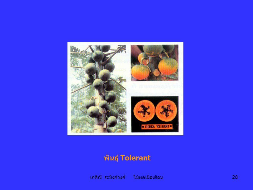 เกศิณี ระมิงค์วงศ์ ไม้ผลเมืองร้อน 28 พันธุ์ Tolerant