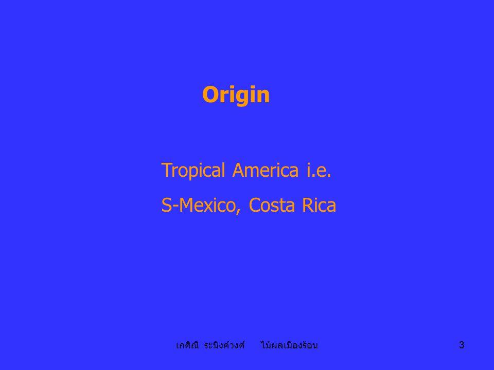 เกศิณี ระมิงค์วงศ์ ไม้ผลเมืองร้อน 4 Distribution - Panama, Darian (1513-1525), San Domingo, West Indies, Philippines (C16), Indonesis & India (C18), Zanzibar & Uganda (1874) - Caribbean, U.S.A.