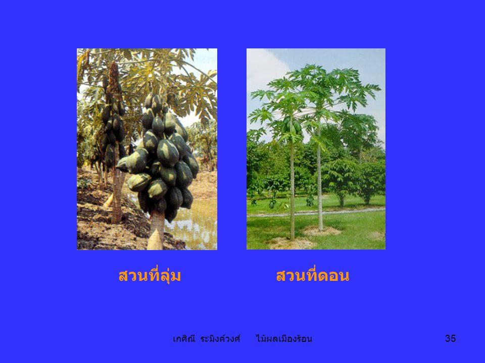 เกศิณี ระมิงค์วงศ์ ไม้ผลเมืองร้อน 35 สวนที่ลุ่มสวนที่ดอน
