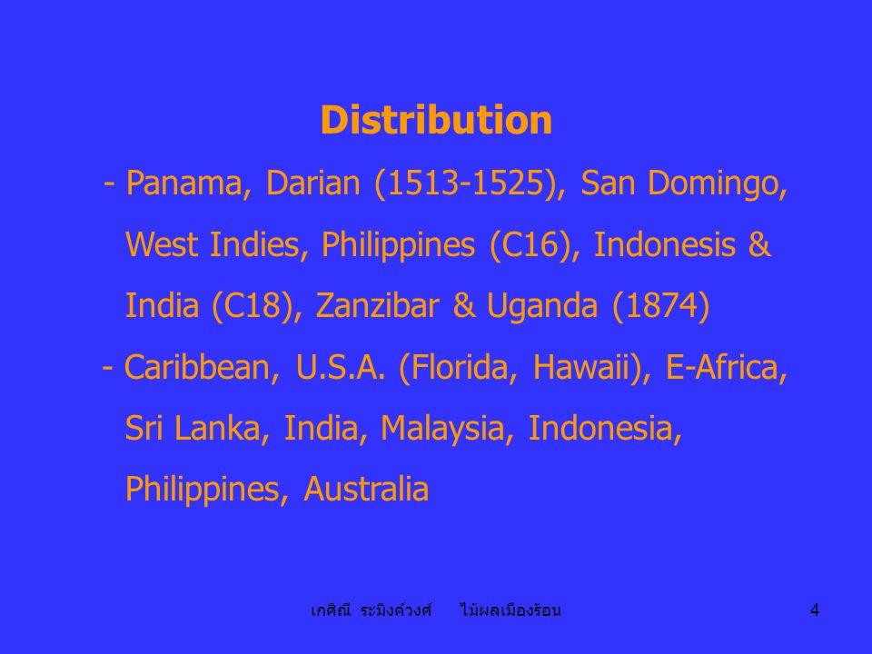 เกศิณี ระมิงค์วงศ์ ไม้ผลเมืองร้อน 4 Distribution - Panama, Darian (1513-1525), San Domingo, West Indies, Philippines (C16), Indonesis & India (C18), Z