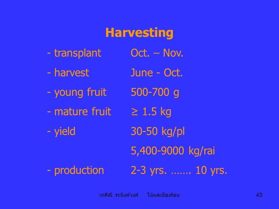 เกศิณี ระมิงค์วงศ์ ไม้ผลเมืองร้อน 43 Harvesting - transplantOct. – Nov. - harvestJune - Oct. - young fruit500-700 g - mature fruit≥ 1.5 kg - yield30-5