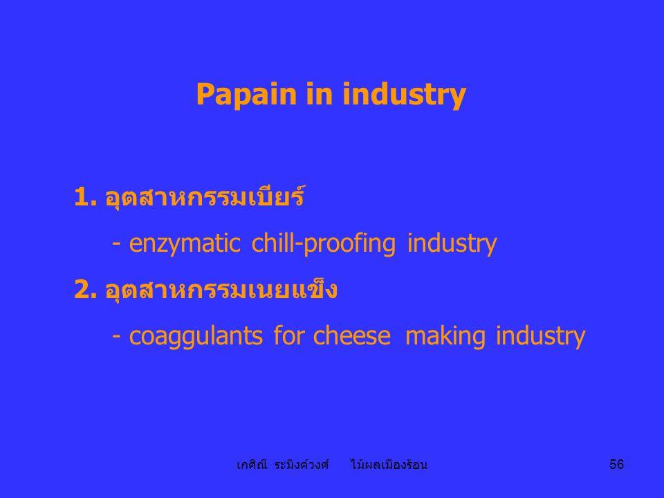 เกศิณี ระมิงค์วงศ์ ไม้ผลเมืองร้อน 56 Papain in industry 1. อุตสาหกรรมเบียร์ - enzymatic chill-proofing industry 2. อุตสาหกรรมเนยแข็ง - coaggulants for