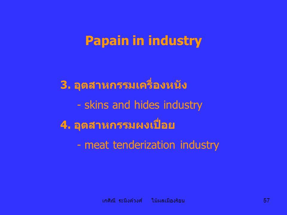 เกศิณี ระมิงค์วงศ์ ไม้ผลเมืองร้อน 57 Papain in industry 3. อุตสาหกรรมเครื่องหนัง - skins and hides industry 4. อุตสาหกรรมผงเปื่อย - meat tenderization