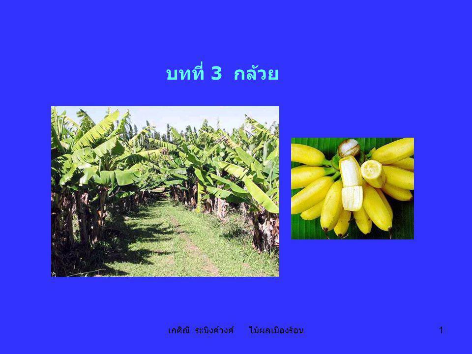 เกศิณี ระมิงค์วงศ์ ไม้ผลเมืองร้อน 72 แหล่งปลูก - กำแพงเพชร ตาก เพชรบุรี สารทไทย - กันยายน (เดือน 10) ฤดูปลูกสิงหาคม – กันยายน ระยะปลูก 2.0 – 2.5 x 2.0 – 2.5 เมตร จำนวนต้น256 – 400 ต้น ปลูก – ออกปลี8 – 10 เดือน ออกปลี – ตัดปลีทิ้ง15 วัน ตัดปลีทิ้ง – ผลแก่45 วัน