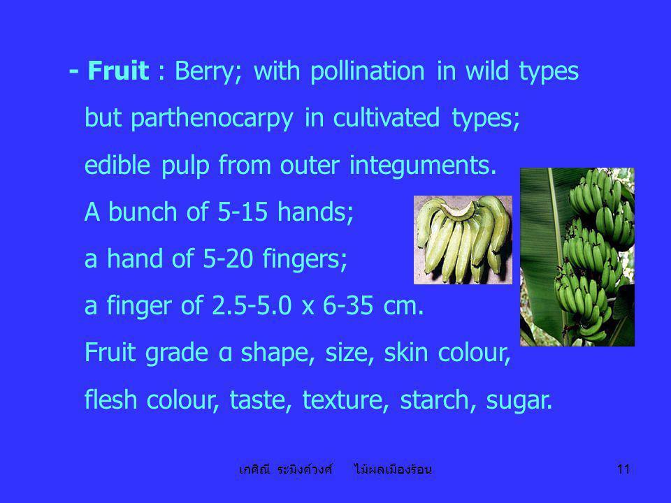 เกศิณี ระมิงค์วงศ์ ไม้ผลเมืองร้อน 11 - Fruit : Berry; with pollination in wild types but parthenocarpy in cultivated types; edible pulp from outer int