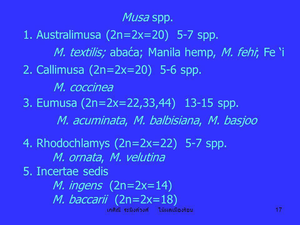 เกศิณี ระมิงค์วงศ์ ไม้ผลเมืองร้อน 17 Musa spp. 1. Australimusa (2n=2x=20) 5-7 spp. M. textilis; abaća; Manila hemp, M. fehi; Fe 'i 2. Callimusa (2n=2x