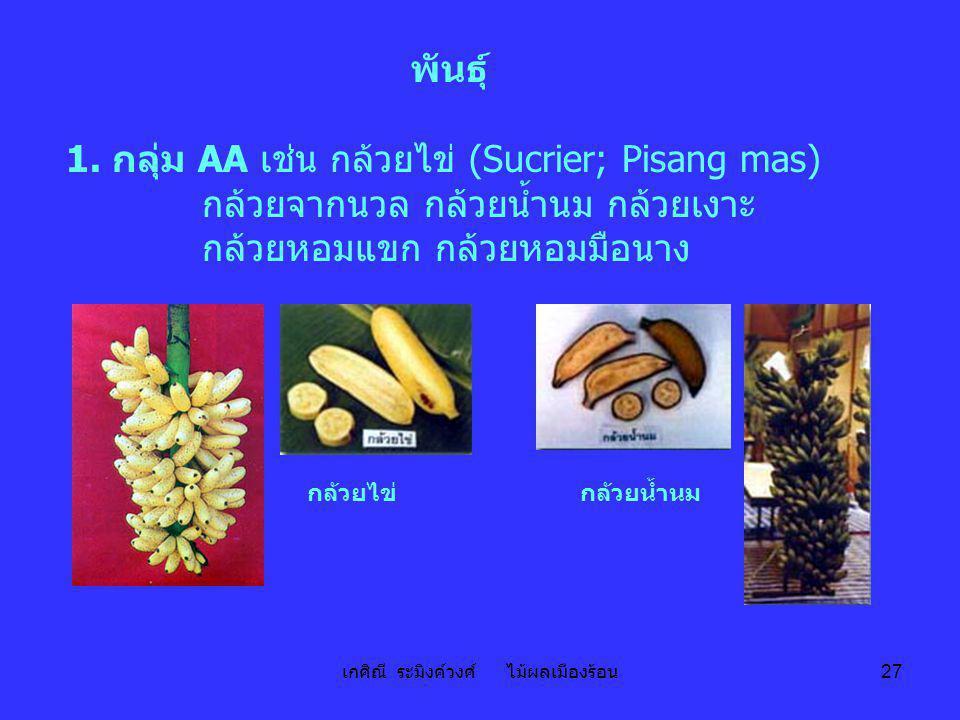 เกศิณี ระมิงค์วงศ์ ไม้ผลเมืองร้อน 27 พันธุ์ 1. กลุ่ม AA เช่น กล้วยไข่ (Sucrier; Pisang mas) กล้วยจากนวล กล้วยน้ำนม กล้วยเงาะ กล้วยหอมแขก กล้วยหอมมือนา
