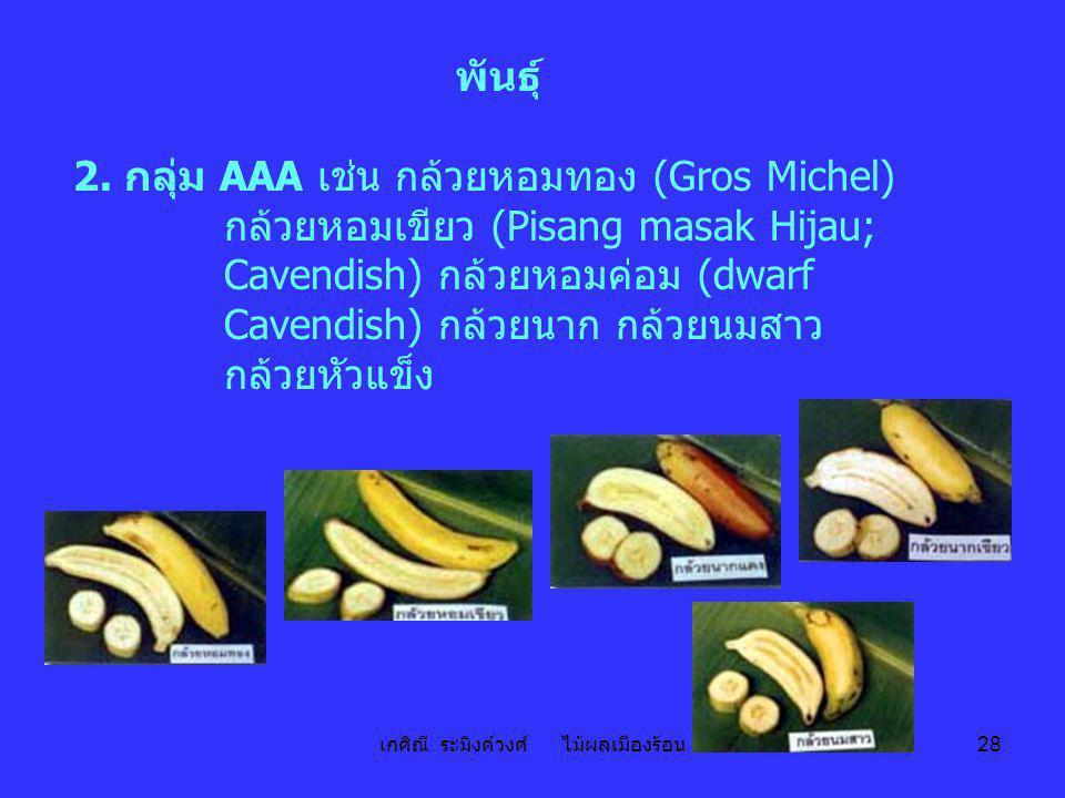 เกศิณี ระมิงค์วงศ์ ไม้ผลเมืองร้อน 28 พันธุ์ 2. กลุ่ม AAA เช่น กล้วยหอมทอง (Gros Michel) กล้วยหอมเขียว (Pisang masak Hijau; Cavendish) กล้วยหอมค่อม (dw