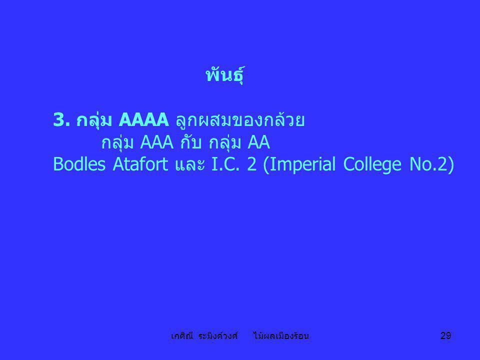 เกศิณี ระมิงค์วงศ์ ไม้ผลเมืองร้อน 29 พันธุ์ 3. กลุ่ม AAAA ลูกผสมของกล้วย กลุ่ม AAA กับ กลุ่ม AA Bodles Atafort และ I.C. 2 (Imperial College No.2)