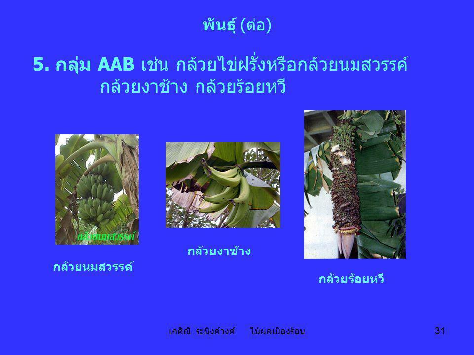 เกศิณี ระมิงค์วงศ์ ไม้ผลเมืองร้อน 31 พันธุ์ (ต่อ) 5. กลุ่ม AAB เช่น กล้วยไข่ฝรั่งหรือกล้วยนมสวรรค์ กล้วยงาช้าง กล้วยร้อยหวี กล้วยงาช้าง กล้วยนมสวรรค์