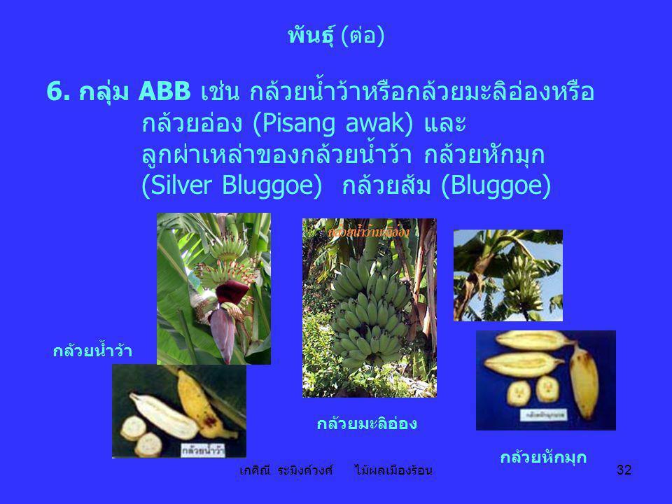เกศิณี ระมิงค์วงศ์ ไม้ผลเมืองร้อน 32 พันธุ์ (ต่อ) 6. กลุ่ม ABB เช่น กล้วยน้ำว้าหรือกล้วยมะลิอ่องหรือ กล้วยอ่อง (Pisang awak) และ ลูกผ่าเหล่าของกล้วยน้