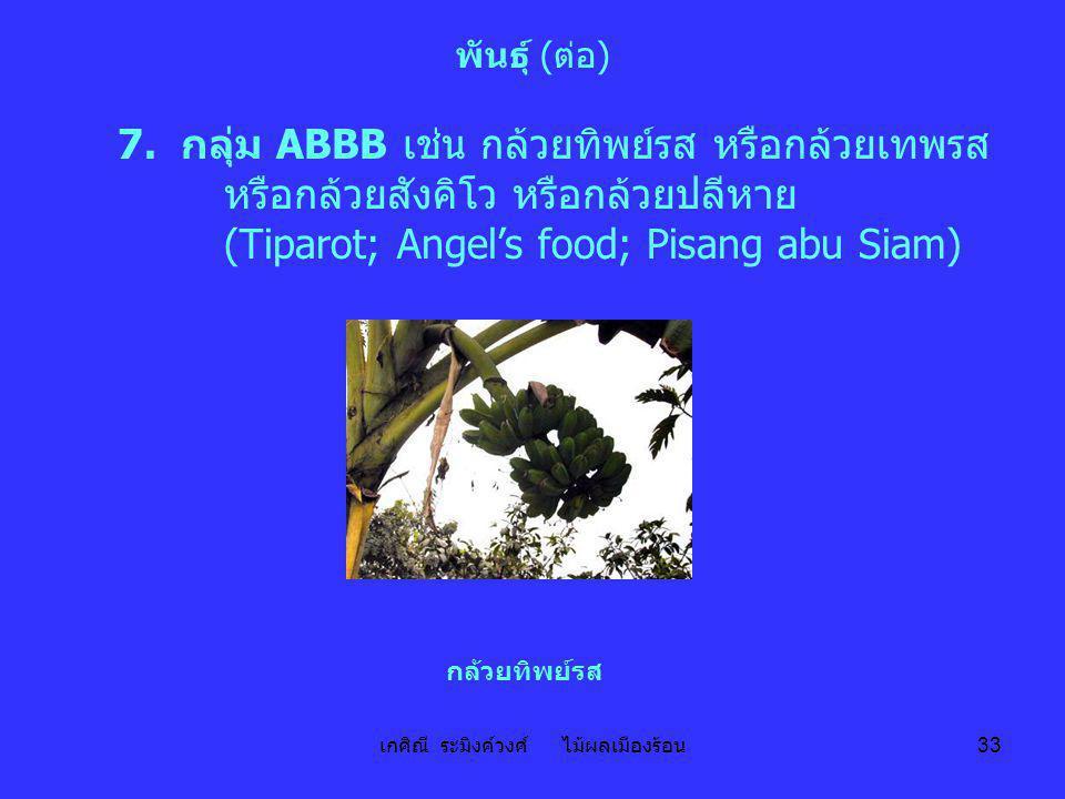 เกศิณี ระมิงค์วงศ์ ไม้ผลเมืองร้อน 33 พันธุ์ (ต่อ) 7. กลุ่ม ABBB เช่น กล้วยทิพย์รส หรือกล้วยเทพรส หรือกล้วยสังคิโว หรือกล้วยปลีหาย (Tiparot; Angel's fo