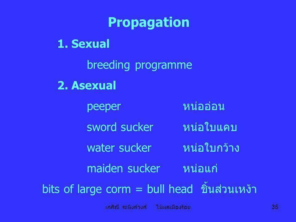 เกศิณี ระมิงค์วงศ์ ไม้ผลเมืองร้อน 35 Propagation 1. Sexual breeding programme 2. Asexual peeper หน่ออ่อน sword sucker หน่อใบแคบ water sucker หน่อใบกว้