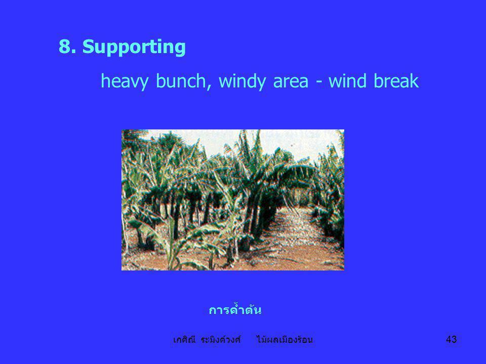 เกศิณี ระมิงค์วงศ์ ไม้ผลเมืองร้อน 43 8. Supporting heavy bunch, windy area - wind break การค้ำต้น