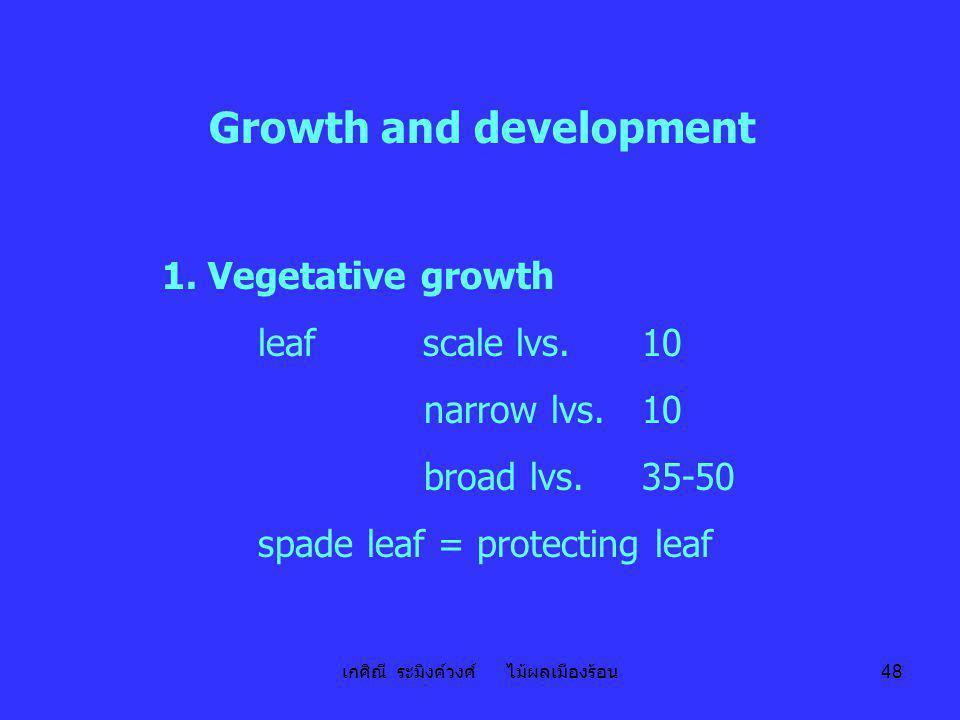 เกศิณี ระมิงค์วงศ์ ไม้ผลเมืองร้อน 48 Growth and development 1. Vegetative growth leaf scale lvs.10 narrow lvs.10 broad lvs.35-50 spade leaf = protecti