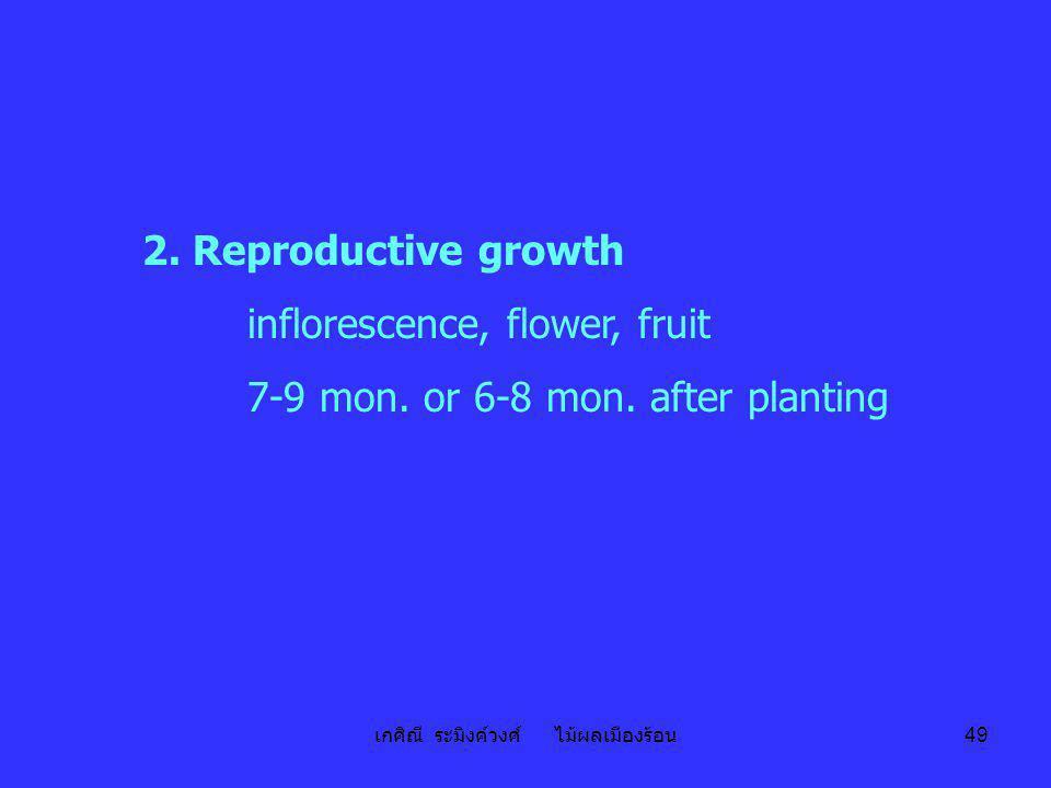 เกศิณี ระมิงค์วงศ์ ไม้ผลเมืองร้อน 49 2. Reproductive growth inflorescence, flower, fruit 7-9 mon. or 6-8 mon. after planting