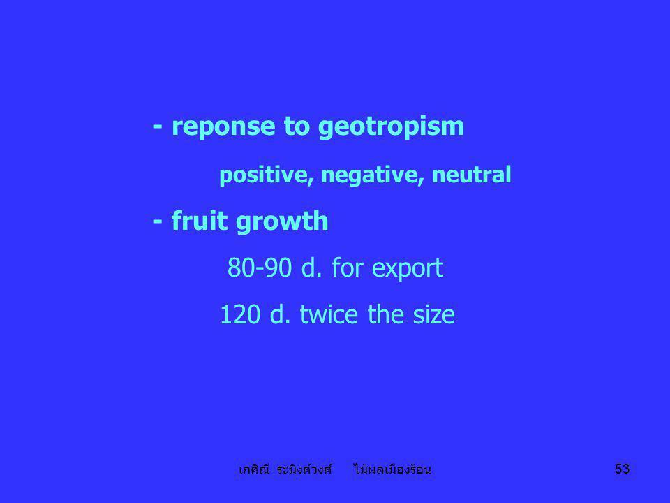 เกศิณี ระมิงค์วงศ์ ไม้ผลเมืองร้อน 53 - reponse to geotropism positive, negative, neutral - fruit growth 80-90 d. for export 120 d. twice the size