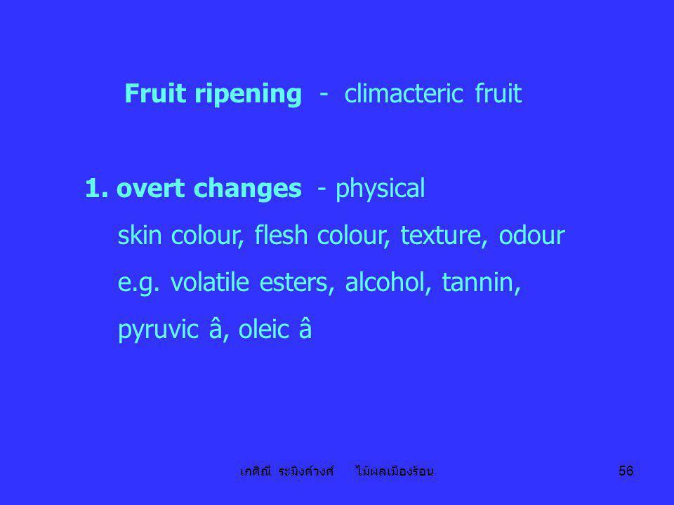 เกศิณี ระมิงค์วงศ์ ไม้ผลเมืองร้อน 56 Fruit ripening - climacteric fruit 1. overt changes - physical skin colour, flesh colour, texture, odour e.g. vol