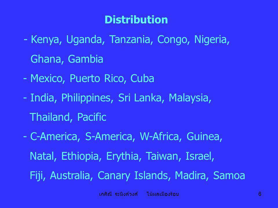 เกศิณี ระมิงค์วงศ์ ไม้ผลเมืองร้อน 6 Distribution - Kenya, Uganda, Tanzania, Congo, Nigeria, Ghana, Gambia - Mexico, Puerto Rico, Cuba - India, Philipp