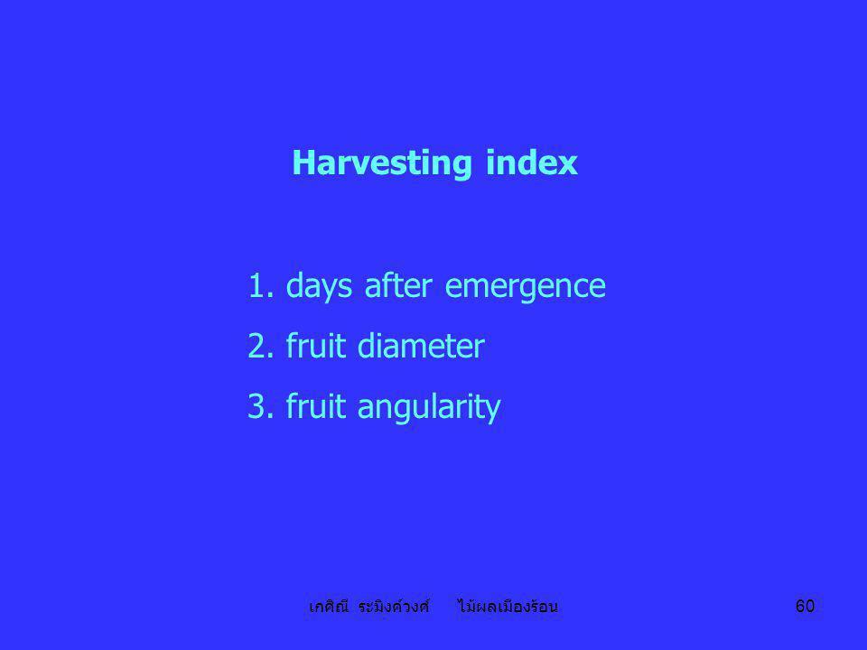 เกศิณี ระมิงค์วงศ์ ไม้ผลเมืองร้อน 60 Harvesting index 1. days after emergence 2. fruit diameter 3. fruit angularity