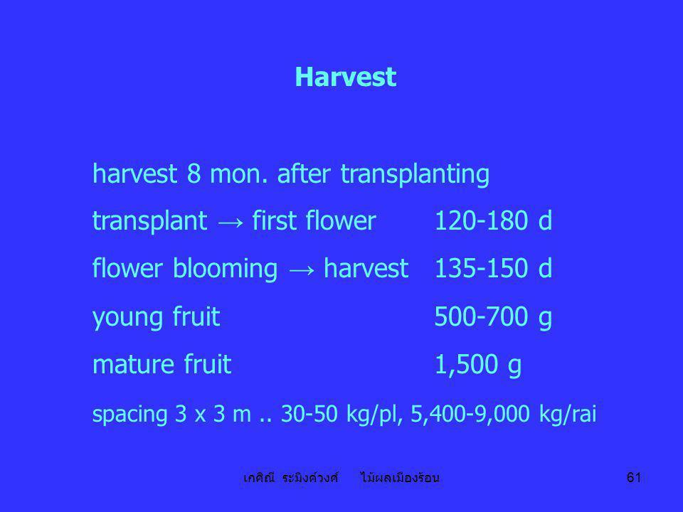 เกศิณี ระมิงค์วงศ์ ไม้ผลเมืองร้อน 61 Harvest harvest 8 mon. after transplanting transplant → first flower120-180 d flower blooming → harvest135-150 d