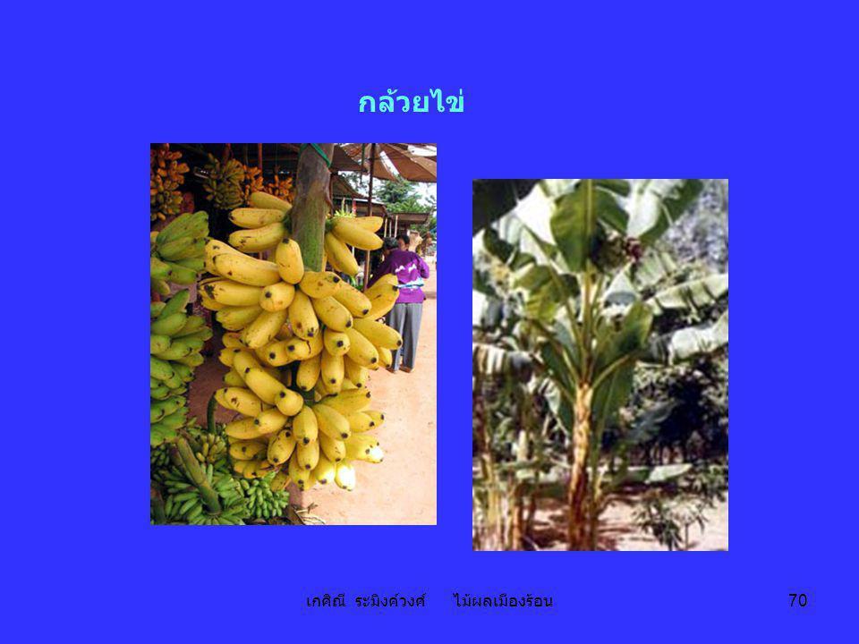 เกศิณี ระมิงค์วงศ์ ไม้ผลเมืองร้อน 70 กล้วยไข่