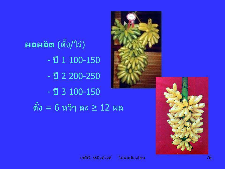เกศิณี ระมิงค์วงศ์ ไม้ผลเมืองร้อน 75 ผลผลิต (ตั้ง/ไร่) - ปี 1 100-150 - ปี 2 200-250 - ปี 3 100-150 ตั้ง = 6 หวีๆ ละ ≥ 12 ผล