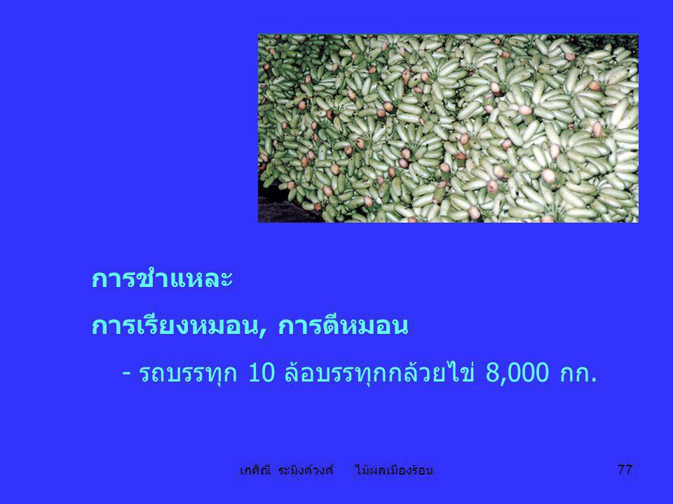 เกศิณี ระมิงค์วงศ์ ไม้ผลเมืองร้อน 77 การชำแหละ การเรียงหมอน, การตีหมอน - รถบรรทุก 10 ล้อบรรทุกกล้วยไข่ 8,000 กก.