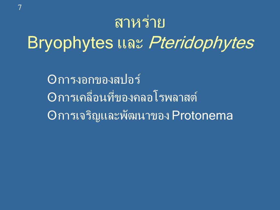 สาหร่าย Bryophytes และ Pteridophytes ʘการงอกของสปอร์ ʘการเคลื่อนที่ของคลอโรพลาสต์ ʘการเจริญและพัฒนาของ Protonema 7