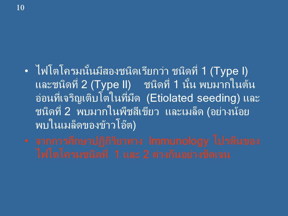 ไฟโตโครมนั้นมีสองชนิดเรียกว่า ชนิดที่ 1 (Type I) และชนิดที่ 2 (Type II) ชนิดที่ 1 นั้น พบมากในต้น อ่อนที่เจริญเติบโตในที่มืด (Etiolated seeding) และ ช