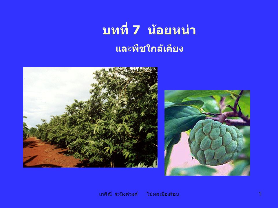 เกศิณี ระมิงค์วงศ์ ไม้ผลเมืองร้อน 2 น้อยหน่า sugar apple; sweet sop Annona squamosa L.