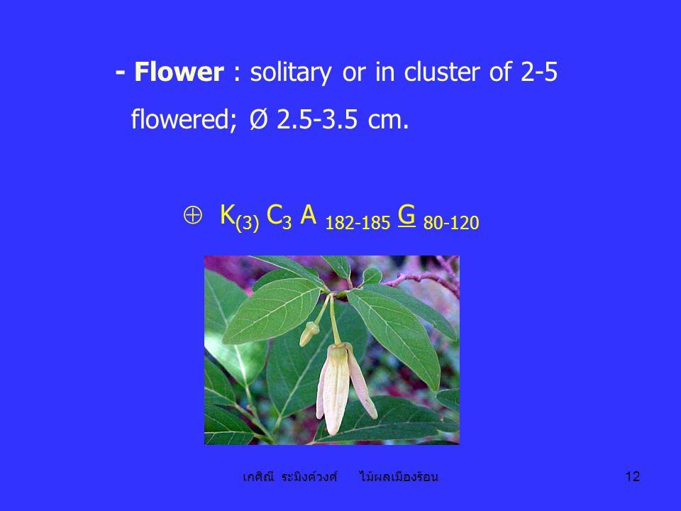 เกศิณี ระมิงค์วงศ์ ไม้ผลเมืองร้อน 12 - Flower : solitary or in cluster of 2-5 flowered; Ø 2.5-3.5 cm.  K (3) C 3 A 182-185 G 80-120