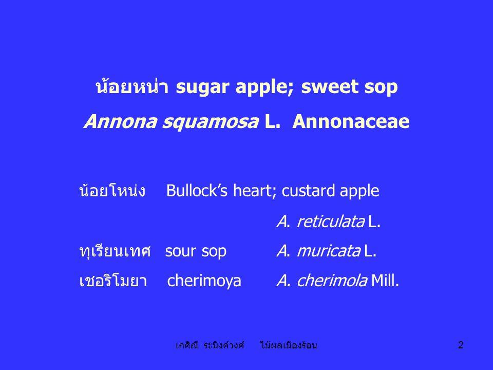 เกศิณี ระมิงค์วงศ์ ไม้ผลเมืองร้อน 2 น้อยหน่า sugar apple; sweet sop Annona squamosa L. Annonaceae น้อยโหน่ง Bullock's heart; custard apple A. reticula