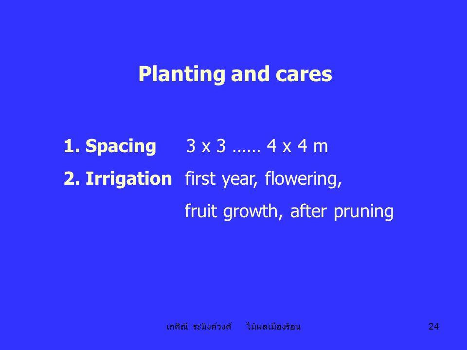 เกศิณี ระมิงค์วงศ์ ไม้ผลเมืองร้อน 24 Planting and cares 1. Spacing 3 x 3 …… 4 x 4 m 2. Irrigation first year, flowering, fruit growth, after pruning