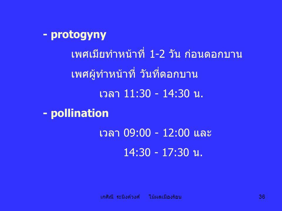 เกศิณี ระมิงค์วงศ์ ไม้ผลเมืองร้อน 36 - protogyny เพศเมียทำหน้าที่ 1-2 วัน ก่อนดอกบาน เพศผู้ทำหน้าที่ วันที่ดอกบาน เวลา 11:30 - 14:30 น. - pollination