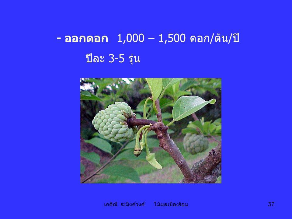 เกศิณี ระมิงค์วงศ์ ไม้ผลเมืองร้อน 37 - ออกดอก 1,000 – 1,500 ดอก/ต้น/ปี ปีละ 3-5 รุ่น