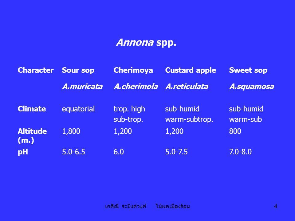 เกศิณี ระมิงค์วงศ์ ไม้ผลเมืองร้อน 15 น้อยหน่า sugar apple; sweet sop; Annona squamosa L.