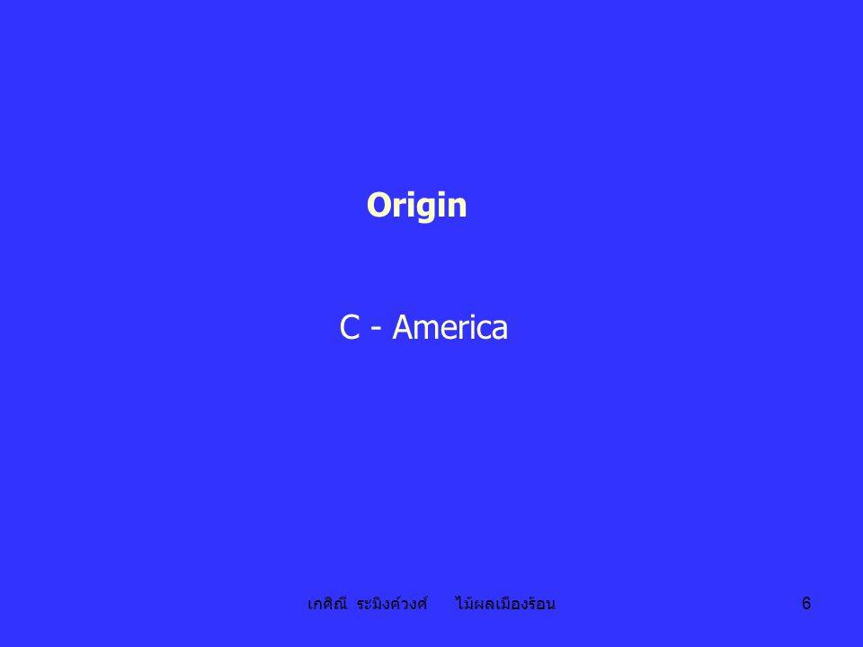 เกศิณี ระมิงค์วงศ์ ไม้ผลเมืองร้อน 6 Origin C - America