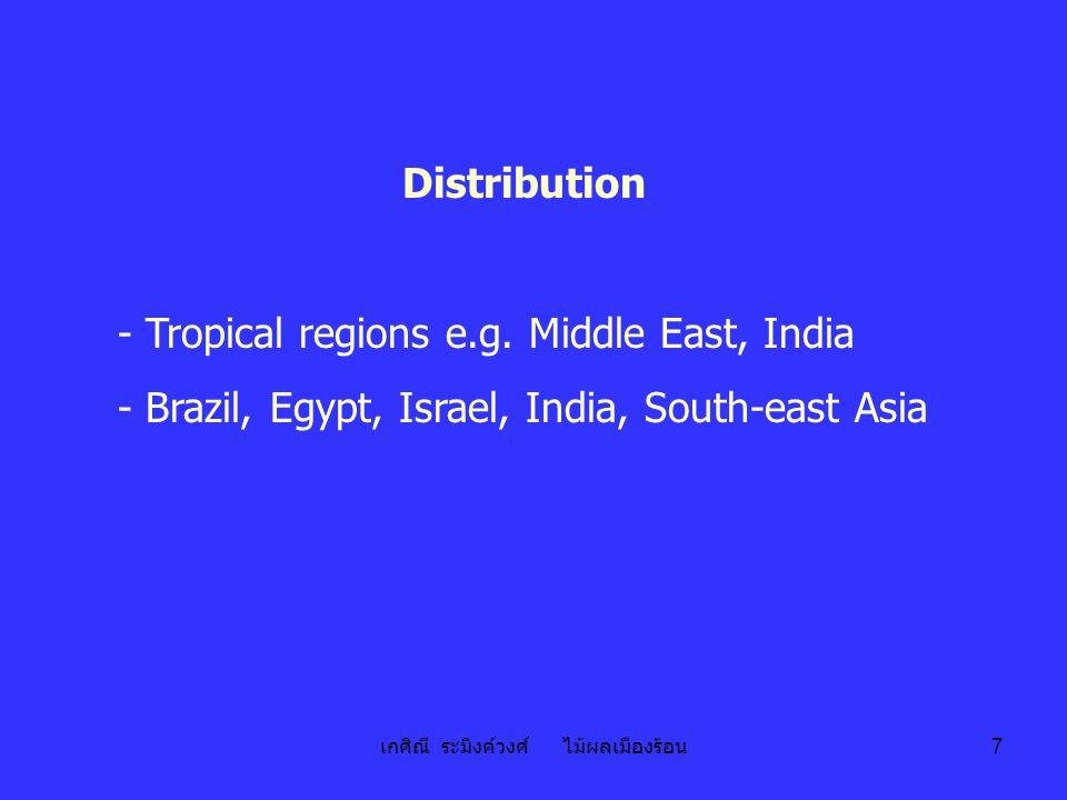 เกศิณี ระมิงค์วงศ์ ไม้ผลเมืองร้อน 7 Distribution - Tropical regions e.g. Middle East, India - Brazil, Egypt, Israel, India, South-east Asia