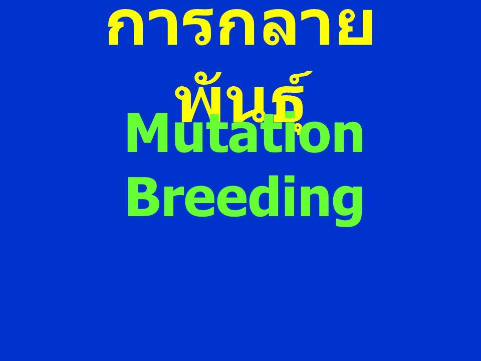 การกลาย พันธุ์ Mutation Breeding