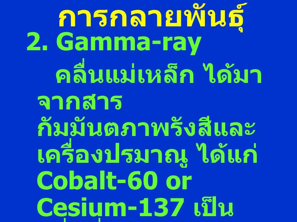 การกลายพันธุ์ 2. Gamma-ray คลื่นแม่เหล็ก ได้มา จากสาร กัมมันตภาพรังสีและ เครื่องปรมาณู ได้แก่ Cobalt-60 or Cesium-137 เป็น คลื่นที่มีอันตราย มี อำนาจก