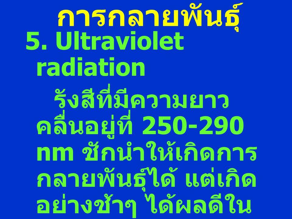 การกลายพันธุ์ 5. Ultraviolet radiation รังสีที่มีความยาว คลื่นอยู่ที่ 250-290 nm ชักนำให้เกิดการ กลายพันธุ์ได้ แต่เกิด อย่างช้าๆ ได้ผลดีใน ละอองเรณู น
