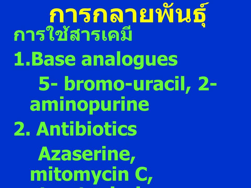 การกลายพันธุ์ การใช้สารเคมี 1.Base analogues 5- bromo-uracil, 2- aminopurine 2. Antibiotics Azaserine, mitomycin C, streptonigrin, antiomycin D