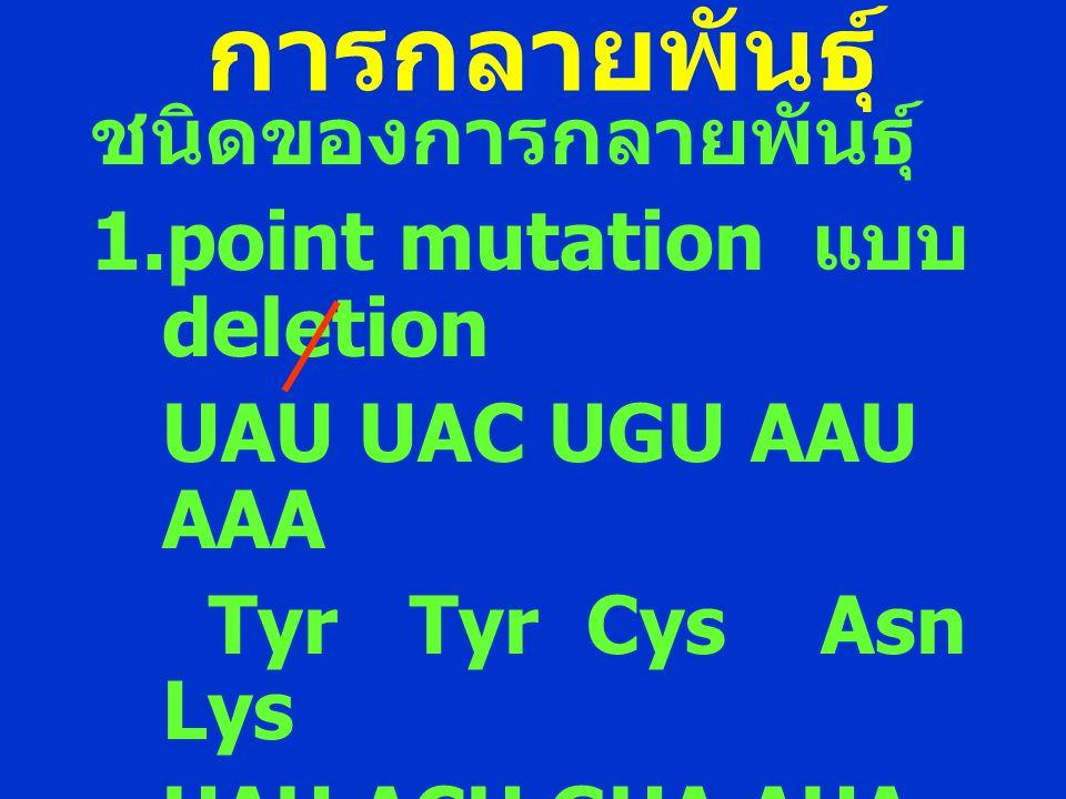 การกลายพันธุ์ ชนิดของการกลายพันธุ์ 1.point mutation แบบ deletion UAU UAC UGU AAU AAA Tyr Tyr Cys Asn Lys UAU ACU GUA AUA AA Tyr Thr Val Ile