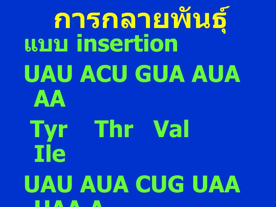 การกลายพันธุ์ แบบ insertion UAU ACU GUA AUA AA Tyr Thr Val Ile UAU AUA CUG UAA UAA A Tyr Ile Leu stop