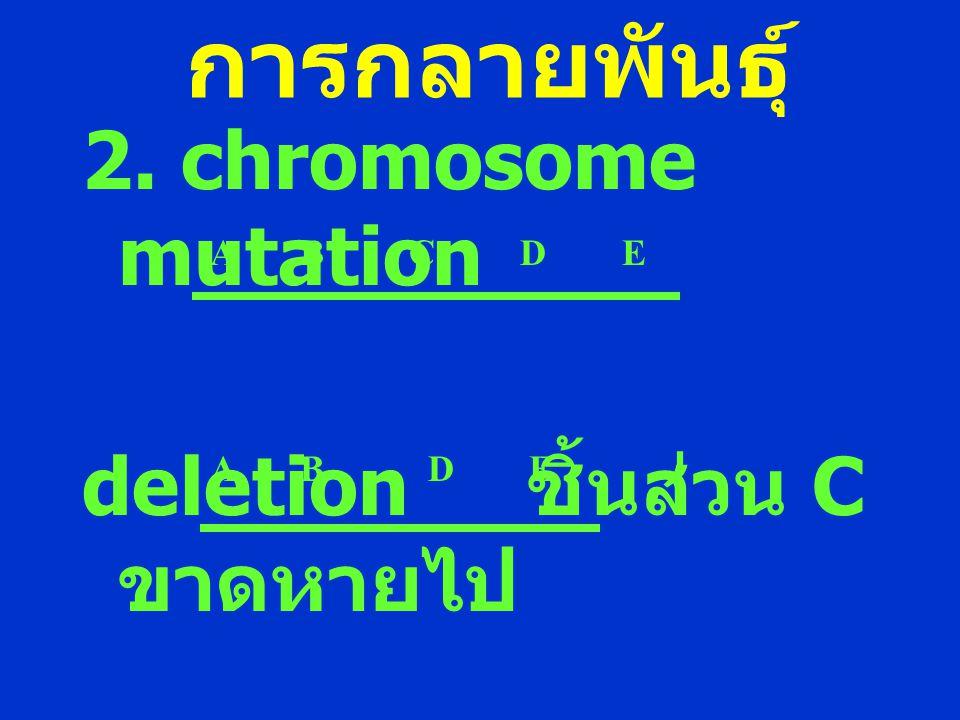 การกลายพันธุ์ 2. chromosome mutation deletion ชิ้นส่วน C ขาดหายไป A B C D E A B D E
